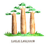 baobabsskog madagascar Royaltyfria Bilder
