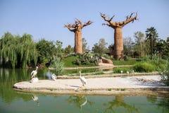 Baobabswald - Madagaskar lizenzfreie stockfotos