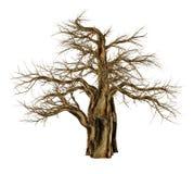 Baobabträd utan sidor, adansoniadigitata - 3D framför Arkivbilder