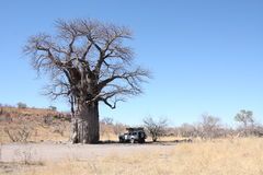 Baobabtree Stock Photography
