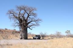 Baobabtree Stockfotografie