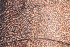 baobabu bagażnik zdjęcia stock
