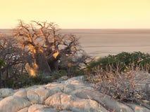 Baobabu drzewo przy Kubu wyspą Fotografia Royalty Free