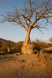 Baobad in desert, Africa Royalty Free Stock Photography