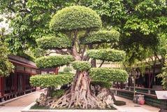Baomo trädgård i Kina Royaltyfria Foton