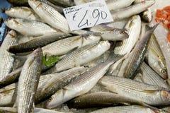Bar de mer frais à la stalle du marché Images libres de droits