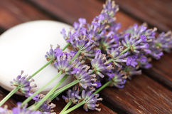 Bar of natural soap with lavender flowers Stock Images
