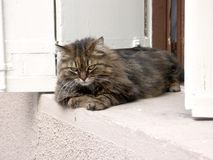 bar się kota obrazy stock