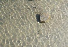 bara en stenyttersida under vatten Royaltyfria Bilder