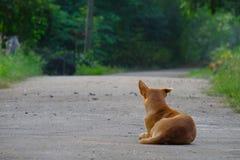 Bara folk hund på gatan arkivbilder