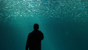 Bara i havet royaltyfri foto