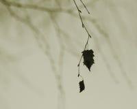 bara leaf Royaltyfri Foto