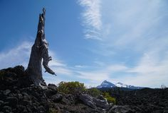 Bara och tyst med lavan royaltyfri foto