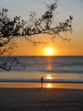 Bara på solnedgången, Guanacaste, Costa Rica Arkivfoto