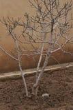 Bara träd i gården royaltyfria bilder