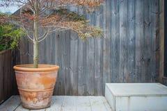 Bara trädtillväxt i lerablomkrukaställe på träterrassen för dekorativt arbeta i trädgården arkivfoton