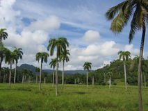 baracoa Cuba krajobrazu zdjęcie stock