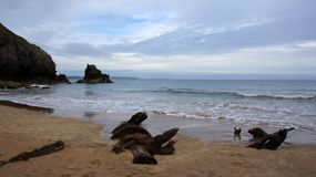 Barafundle bay beach with remains of ship Stock Photography