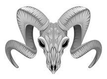 Baran czaszka ilustracji