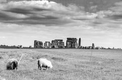 Barani karmienie jako goście objeżdża Stonehenge w czarny i biały Zdjęcia Royalty Free