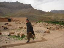 Barani pastuch Zdjęcie Royalty Free