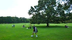 Barania łąka w central park zdjęcie wideo