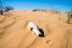 Barania czaszka w piaska zakończeniu zdjęcie stock