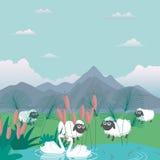 Baranki barani w natury karmy trawie uprawiają ziemię kreskówki ilustrację Zdjęcia Stock