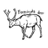 Barasingha deer - vector illustration sketch hand drawn with bla Stock Photo