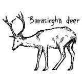 Barasingha deer - vector illustration sketch hand drawn with bla Royalty Free Stock Photos