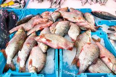 Baratas no vendedor de peixe fotos de stock royalty free