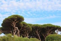 Baratti, Τοσκάνη, Ιταλία Στοκ εικόνα με δικαίωμα ελεύθερης χρήσης
