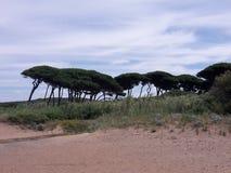 Baratti tuscany Beach nature Stock Image