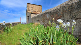 barattien blommar golfen italy tuscany Royaltyfri Foto