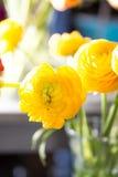 Barattoli di vetro e del fiore Immagini Stock