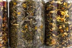 Barattoli di vetro trasparenti delle erbe differenti Fotografia Stock Libera da Diritti