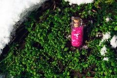 Barattolo con le stelle porpora sopra l'erba Fotografie Stock