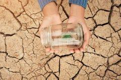 Barattolo di vetro miniatura con la giovane piantina dell'albero che cresce nel suolo, sulla terra vuota della crepa ed asciutta  Fotografie Stock