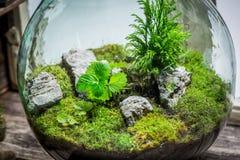 Barattolo meraviglioso con il pezzo di foresta come nuovo concetto di vita Fotografia Stock Libera da Diritti