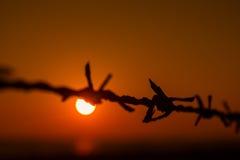 Barb con puesta del sol Foto de archivo libre de regalías
