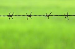 Barb-Draht auf Grün Lizenzfreie Stockfotografie
