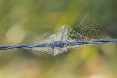 Barb-Draht umgeben durch Spinnennetz lizenzfreies stockfoto