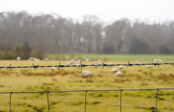 Barb fence in farm land Stock Image