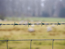 Barb fence in farm land Stock Photo