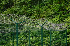 Barb Razor Wire With Central Reinforcement On The Sectional Fenc Royalty Free Stock Image