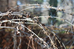 Barb wire. Old rusty barb wire section Royalty Free Stock Image