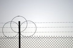 Barb wire. D fence in the afternoon Stock Photography