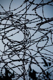 Barb wire. Closeup of a barbed wire over flat background Stock Image