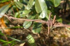 Barb Wire Photo libre de droits