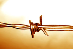 Barb wire. Closeup of barb wire, studio shot Royalty Free Stock Photos